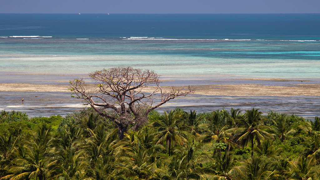 Pemba beach and forest.